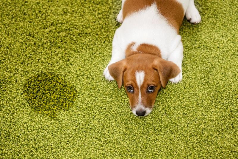 نظافت فضولات حیوان خانگی از چمن مصنوعی