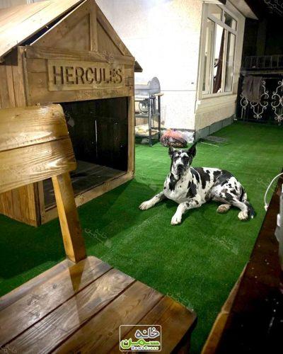 چمن مصنوعی برای سگ خانگی