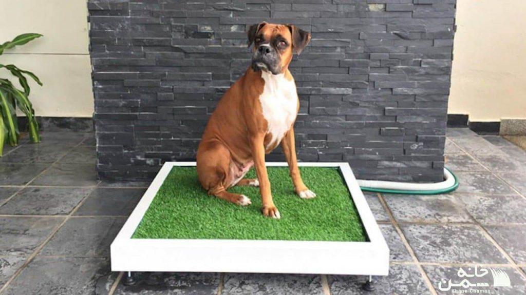 چمن مصنوعی برای پارک سگ